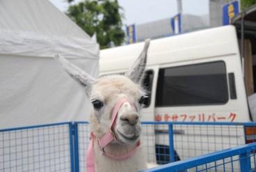 2011_tokyo_drift_2011645_695